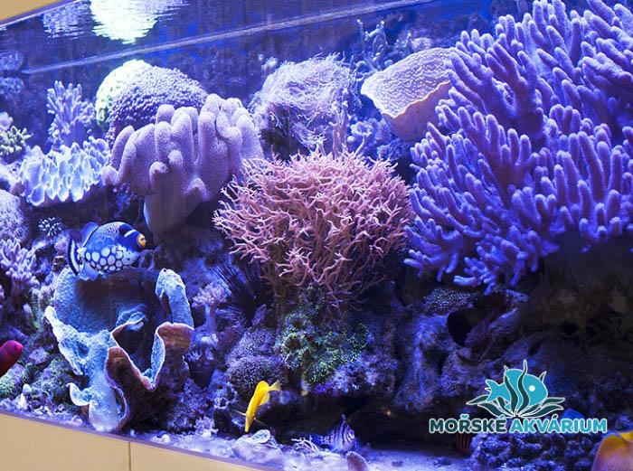 Morska Akvaria Vyroba Servis A Revitalizace Morskeakva Cz