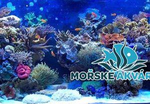 morske-akvarium-__12