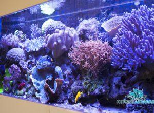 morske-akvarium-__13