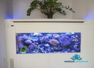 morske-akvarium-__14