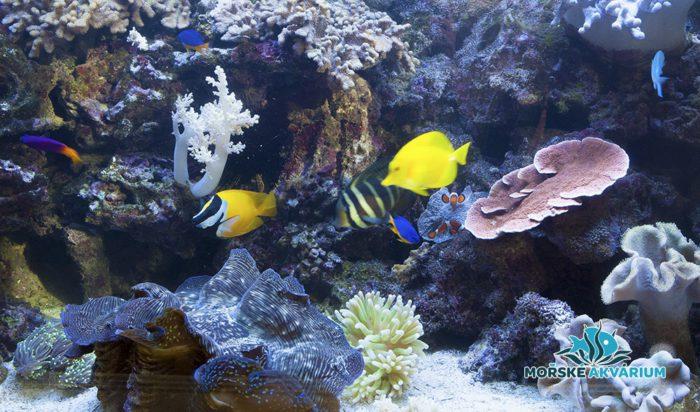 morske-akvarium-__18