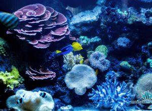 morske-akvarium-__20