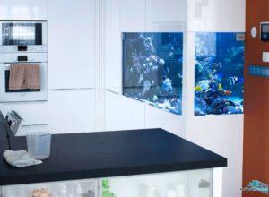morske-akvarium-__33