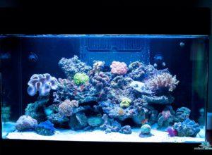 morske-akvarium-__35